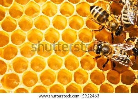 stock photo : Close up view of the working bees on honeycells.