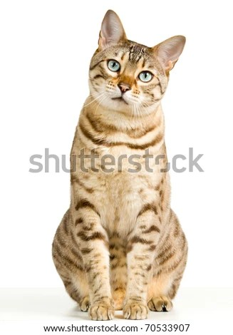 Example of a successful microstock stock photo