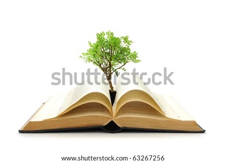 stock photo : Tree growing from book