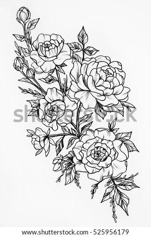 Rose Outline Vector Image Download Free Vector Art