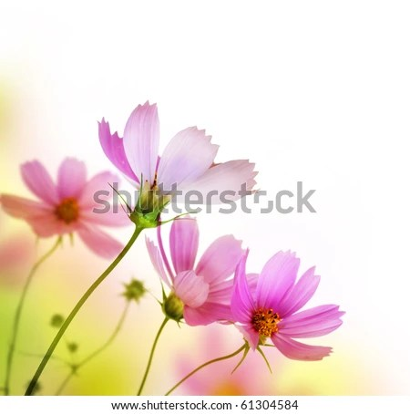 stock photo : Beautiful Floral Border.Flower design