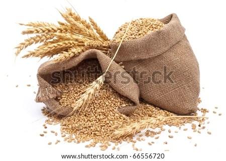 stock photo : Sacks of wheat grains