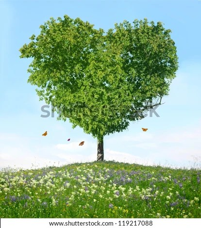 Tree of love - stock photo