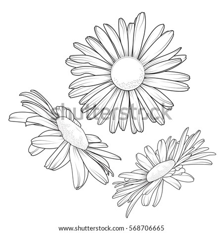 Vector Images, Illustrations and Cliparts: Isolated daisy ...