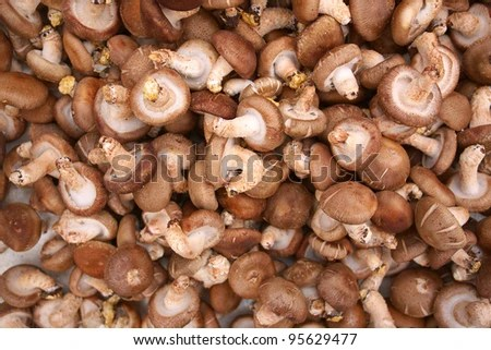 raw healthy fresh mushrooms - stock photo