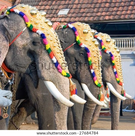 stock photo : Decorated elephants for parade at the annual festival in Siva Temple, Cochin, India