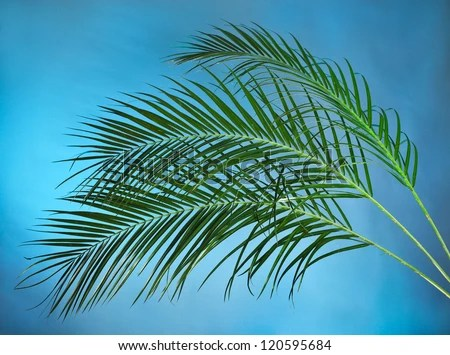 Bilderesultat for palm branches
