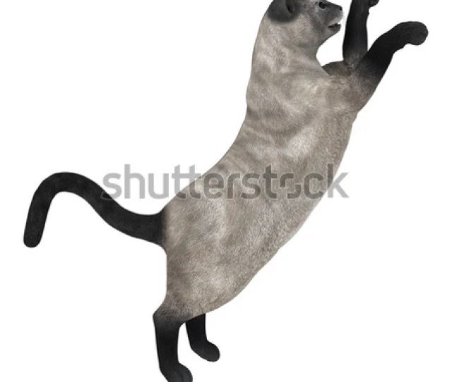 3d Digital Render Of A Playing Siamese Cat Isolated On White Background
