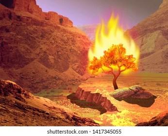 burning bush # 82