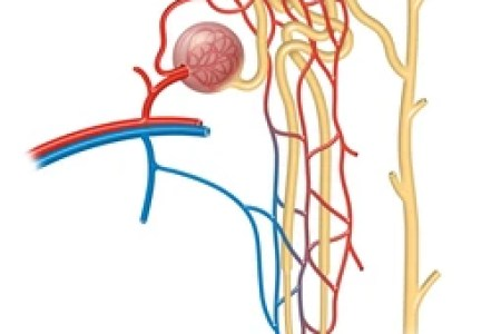 structure of flower diagram structure of nephron structure of heart ...