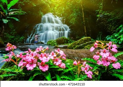 Waterfall Flowers Images Stock Photos Amp Vectors