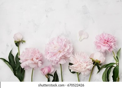 Peony Flower Images  Stock Photos   Vectors   Shutterstock Beautiful pink peony flowers on white stone table with copy space for your  text top view