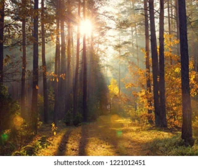 Bright Golden Sunbeams In Fall Forest Golden Autumn Background Path In Autumn Forest