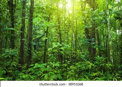 This site uses cookies to improve your experience and to help show content that is more relevant to your interests. Dense Forest Tropical Dense Forest Morning Stock Photo Edit Now 38951068