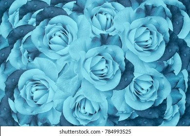 Turquoise Flower Images  Stock Photos   Vectors  10  Off    Shutterstock Floral turquoise beautiful background  Flower composition of roses flowers   Close up