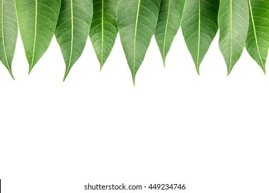 Green Leaves Isolated Background With E For Word