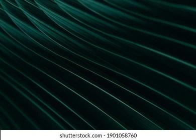 https www shutterstock com fr image photo green palm leaf rainy season dark 1901058760