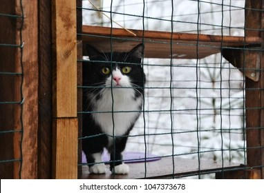 indoor cat diy cat patio winter stock