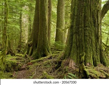 B.c's forests ministry says more deferrals for old growth logging will soon be announced as officials work toward meeting 14 changes the province committed to a year ago over how large, old trees in ecologically rich landscapes are logged. Old Growth Forest Images Stock Photos Vectors Shutterstock