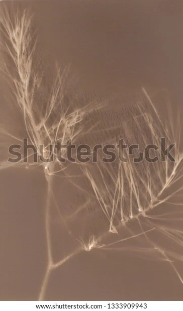 pine needles and branch digital lumen print