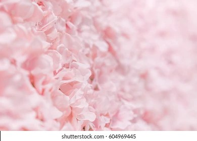 Pink Flowers Background Images Stock Photos Amp Vectors