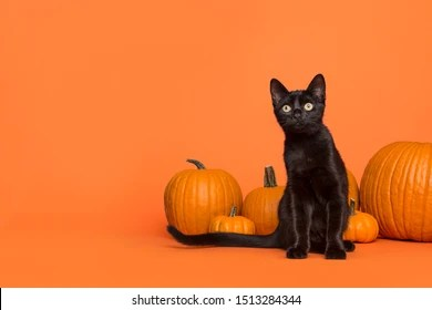 Tons of awesome halloween cat wallpapers to download for free. Black Cat Halloween Images Stock Photos Vectors Shutterstock