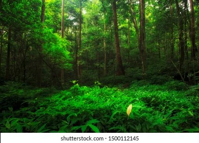Shop · donate to wwf. Equatorial Forest Images Stock Photos Vectors Shutterstock