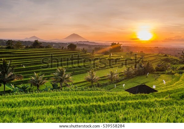 Rice Terraces Mountains Sunrise Bali Indonesia Stock Photo Edit Now 539558284
