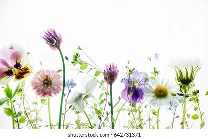 Summer Flowers Images  Stock Photos   Vectors   Shutterstock summer flowers