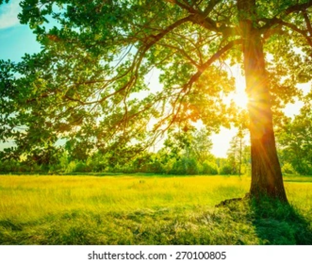 Summer Sunny Forest Trees And Green Grass Nature Wood Sunlight Background Instant Toned Image
