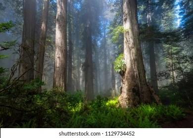 https www shutterstock com image photo tall trees meet sea del norte 1129734452
