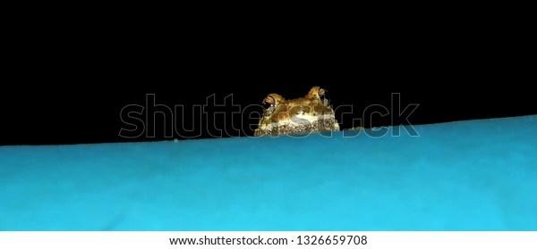 tree frog peeking over the edge of pool