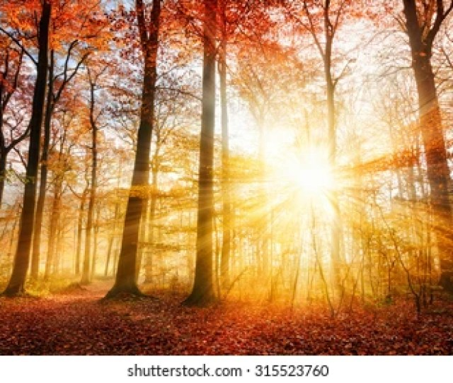 Warm Autumn Scenery In A Forest With The Sun Casting Beautiful Rays Of Light Through