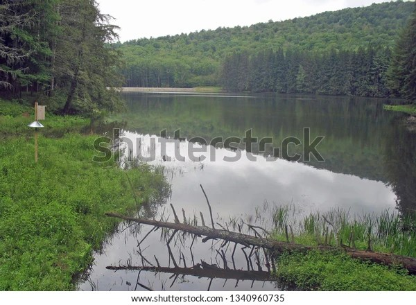 waterway with fallen tree and cloud and tree reflections