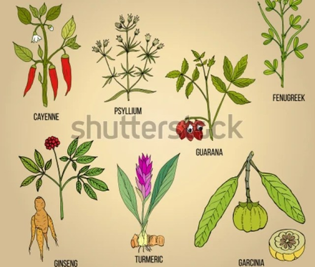 Best Natural Herbs For Fat Burning And Fast Weight Loss Hand Drawn Vector Set Of