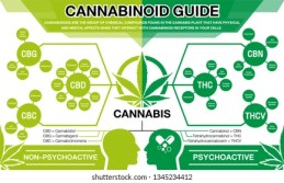 cbd and thc edibles for pain