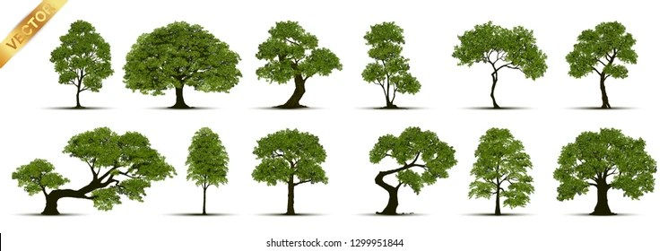 Tree Images Stock Photos Vectors Shutterstock
