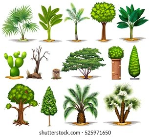 Plant Type Images Stock Photos Vectors Shutterstock