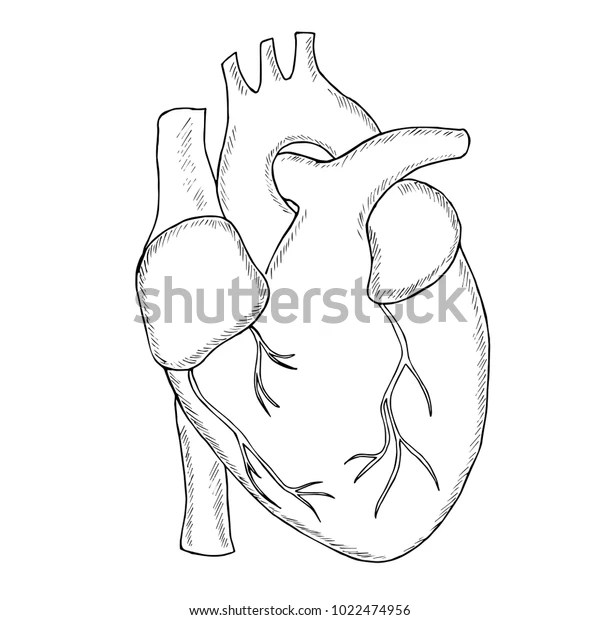 Engraving Hand Draw Human Heart Sketch Stock Vector Royalty Free 1022474956