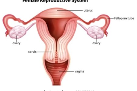 images of female anatomy » Full HD Pictures [4K Ultra]   Full Wallpapers