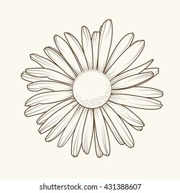 Daisy Drawing Stock Images, Royalty-Free Images & Vectors ...