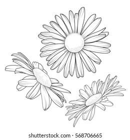 Daisy Field Stock Vectors, Images & Vector Art | Shutterstock