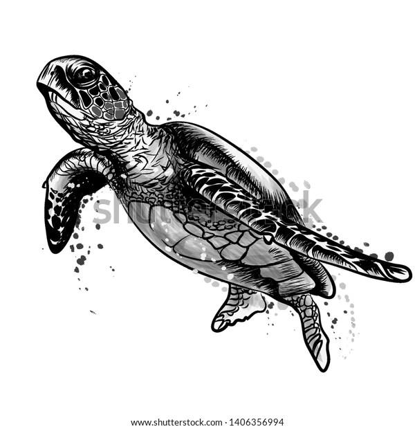 https www shutterstock com fr image vector sea turtle realistic artistic black white 1406356994