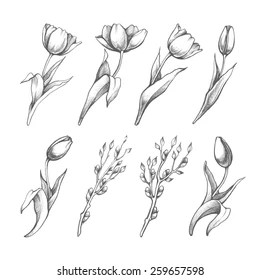 Flower Bud Drawing Images Stock Photos Vectors Shutterstock