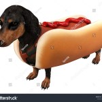 3d Rendering Dachshund Hot Dog Clothes Stock Illustration 1185635440