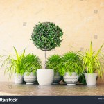 3d Rendering Topiary Plant Frame Pot Stock Illustration 677391574