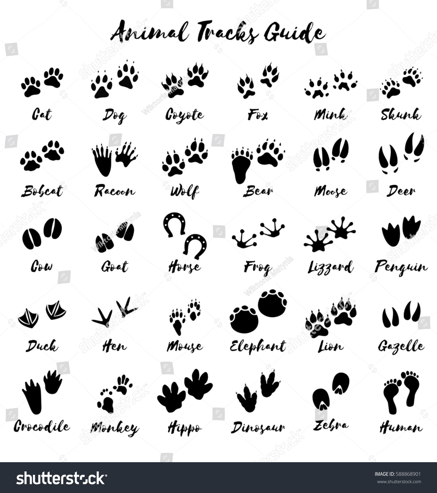 Free Printable Worksheet Animal Tracks