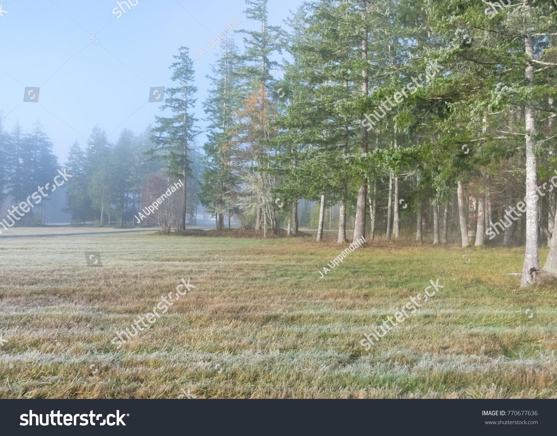 Frost The Pasture Quiz Amp Worksheet 03 01