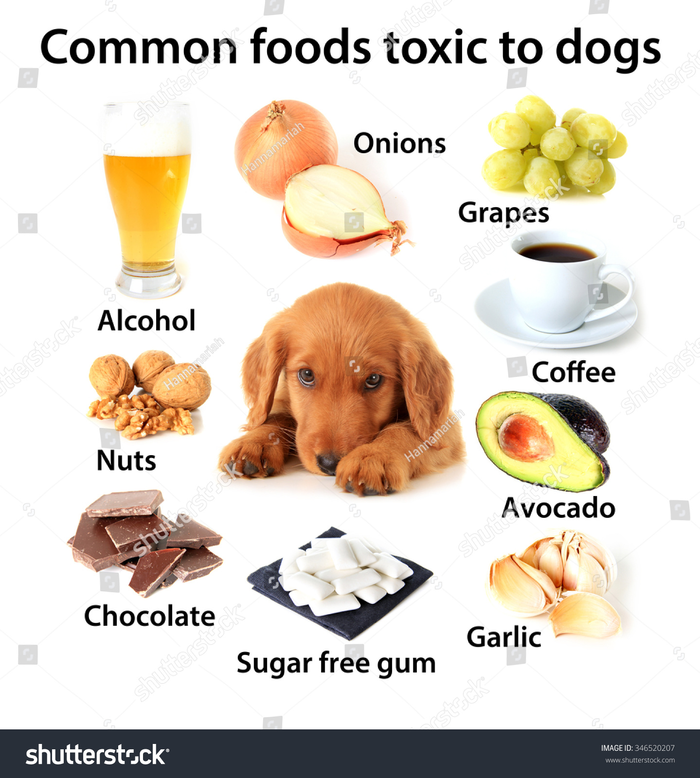 Chart Toxic Foods Dogs Available Without Stock Photo