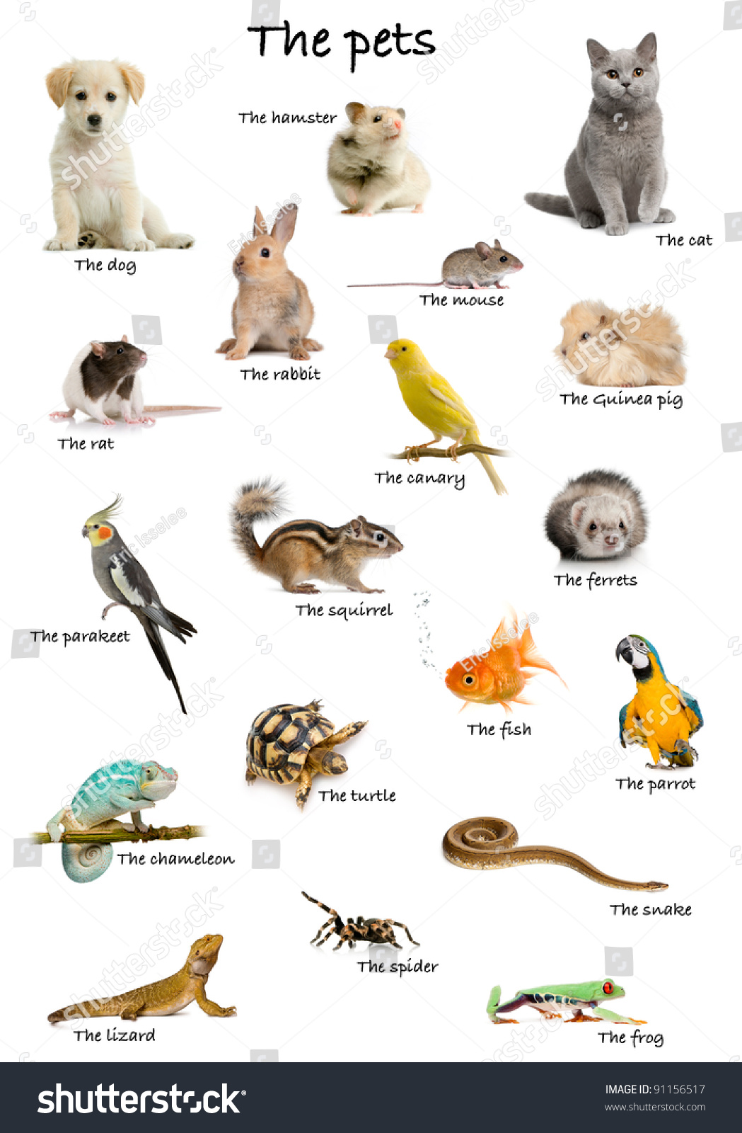 Pet Animals Images With Names